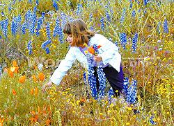 picking-wildflowers