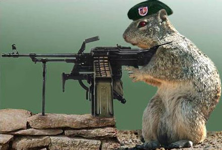 army_squirrel
