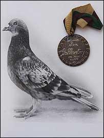 commando_pigeon