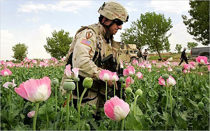 http://aftermathnews.files.wordpress.com/2007/09/afghan-opium.jpg