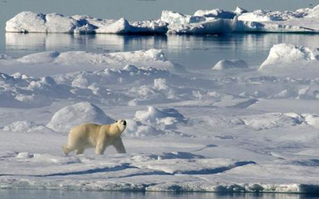 happy_polar_bear