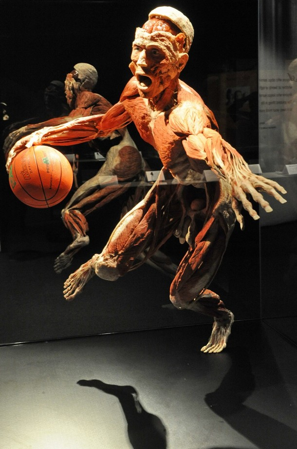 New Body Worlds Exhibition Opens At Singapore Science Centre Aftermath News