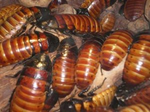 cockroaches-2